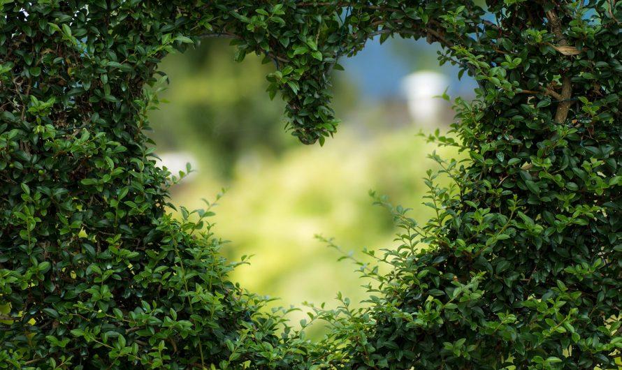 Hechizos de amor con vudú